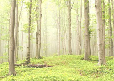 træer_skov